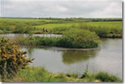 coarse fishing venues in Cornwall - St Tinney Farm